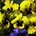 Pansy Party by Dale   Ford