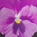 Pansy V by Loueen Morrison