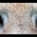 Panther Eyes by Sumit Mehndiratta