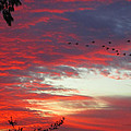 Papaya Colored Sunset With Geese by Kym Backland