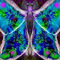 Papillon by Mathieu Lalonde