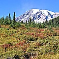 Paradise In Fall On Mt. Rainier 2 by Rob Green