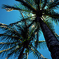 Paradise Island by Mike Flynn