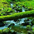 Paradise Of Mossy Logs And Slow Water   by Jeff Swan