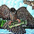 Paragon Falcon by Bob Crawford