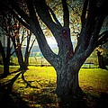 Paris Tree by Michael L Kimble