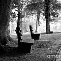 Park Bench In Black And White by Lj Lambert