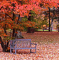 Park Bench In Fall by Jack Schultz