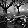 Park Benches by Gary Heller