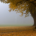 Park In Autumn by David Buffington