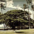 Parkside Postcard by Paulette B Wright