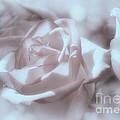 Parlour Rose by Elaine Manley