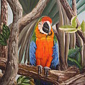 Parrot At New Orleans Zoo by Evelyn Froisland