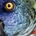 Parrot, Close Up by Axiom Photographic