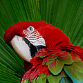Parrot Head by Skip Willits