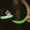 Parrot Snake Leptophis Ahaetulla by Mark Moffett