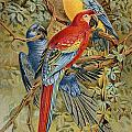 Parrots: Macaws, 19th Cent by Granger