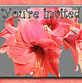 Party Invitation - Amaryllis Flowers by Mother Nature