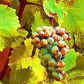 Paschke Grapes by Kathy Corday