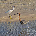 Passing Egrets by Stephen Whalen