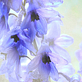 Passion For Flowers. Blue Dreams by Jenny Rainbow