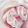 Passion For Flowers. One Rose Two Hearts by Jenny Rainbow