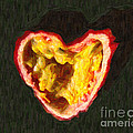 Passion Fruit by Wingsdomain Art and Photography