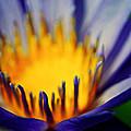 Passion Is Energy by Melanie Moraga