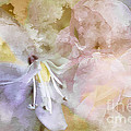 Pastel Floral  by Elaine Manley