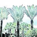 Pastel Palms by Lizi Beard-Ward