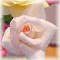 Pastel Petals by Judy Hall-Folde