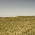 Pasture In Bryne, Norway by Sindre Ellingsen