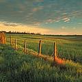 Pasture Sunrise by Darwin Wiggett
