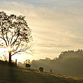 Pasture Sunrise by JD Grimes