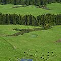 Pastures In Azores Islands by Gaspar Avila