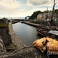 Pasty On The Harbour by Rob Hawkins
