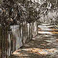 Path Along The Fence by Carolyn Marshall