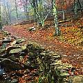Path Through Forest, Shenandoah by Bilderbuch
