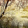 Path To The Meadow by Ellen Heaverlo
