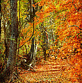 Pathway Through Autumn Woods by Cheryl Davis
