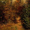 Pathways by Nina Fosdick