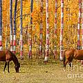 Patriotic Autumn by James BO  Insogna