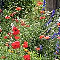 Patriotic Flowers by Ericamaxine Price