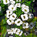 Pattern In Green And White by Judi Bagwell
