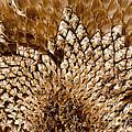 Patterns  by Wilma  Birdwell
