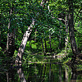 Peaceful Creek by Wanda J King