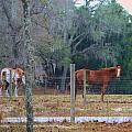 Peaceful Pasture by Judy Hall-Folde