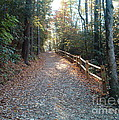 Peaceful Path by Terry Hunt