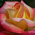 Peaceful Petals by Susan Herber