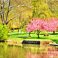 Peaceful Spring II by Darren Fisher